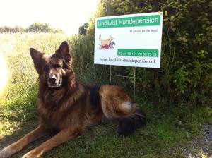 Lindkvist hundepension - Vi passer godt på din hund.